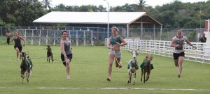 goat raceing 2